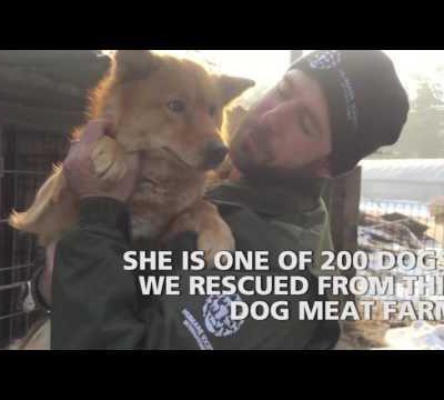 "J'aime une vidéo @YouTube: ""Dog meat farm..."