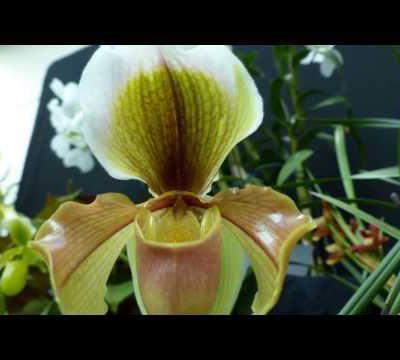 Orchidées du monde - Troisième partie