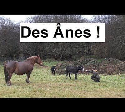 Deux Ânes et un Cheval !