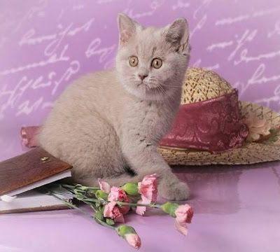 La poésie du chat