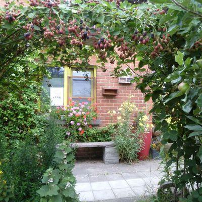 Les Jardiniers Complices et les boutures d'été