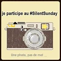Silent Day #53