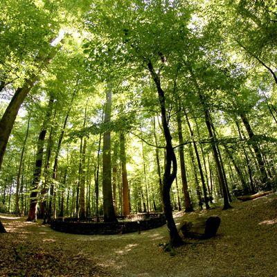 Les bienfaits insoupçonnés des bains de forêt