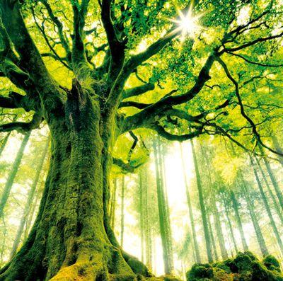 Atelier Création de votre arbre de Vie avec les 5 Sens