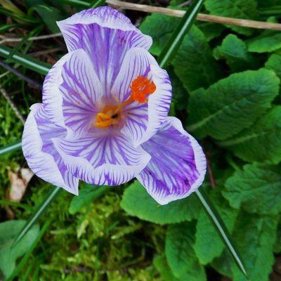 fleu-fleurs
