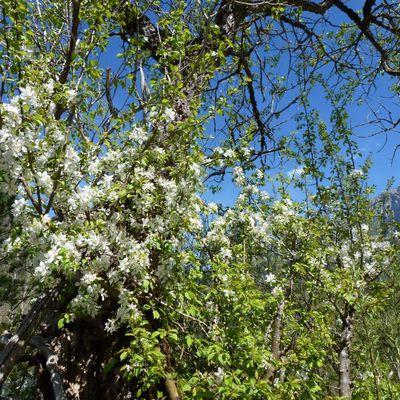 Quelques fleurs sauvages de printemps / Balade dans la Drôme