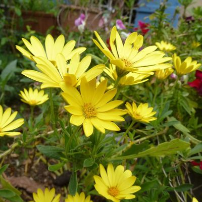 Quelques fleurs de mon jardin avant l'été