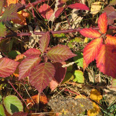 Couleurs d'automne...encore