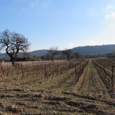 Quelques rencontres près du Puy-Sainte-Réparade / Balade dans les Bouches-du-Rhône