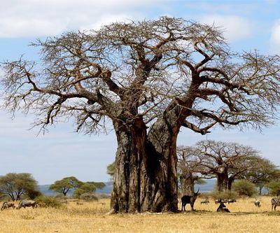 Quelque part, en Afrique...