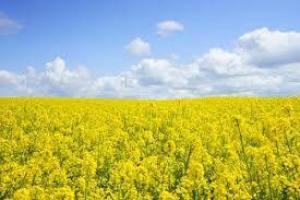 Dijon , c'est...la moutarde !
