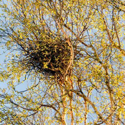 à chacun son nid