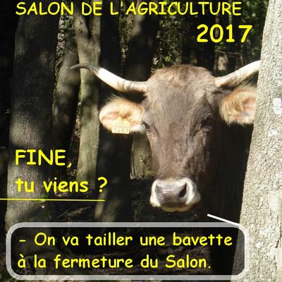 Salon international de l'agriculture 2017 : une vie de vache