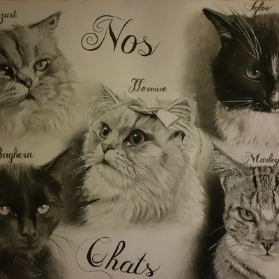 Nos chats