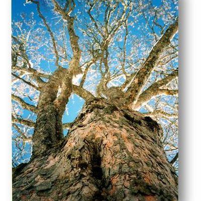 137. Les deux branches de l'arbre