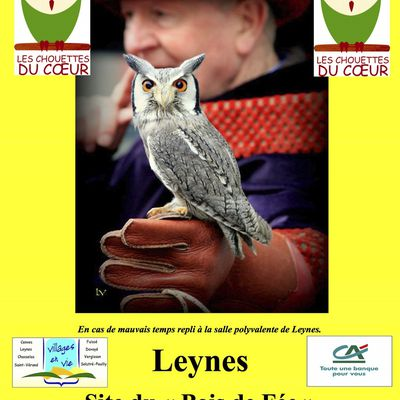 Spectacle de vols de Rapaces