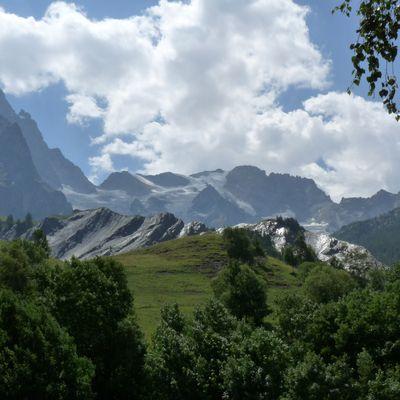MELEZES du Parc National des Ecrins.Vallouise,La Garde,La Meije.