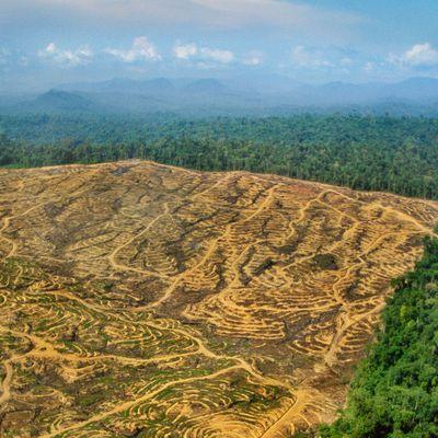 Total va devenir le premier importateur français d'huile de palme