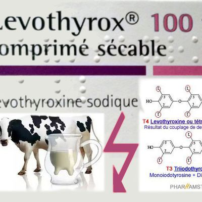 INTERACTION ENTRE LEVOTHYROXINE ET LAIT