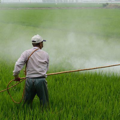 « Pesticide mon amour » en projection à Moulins
