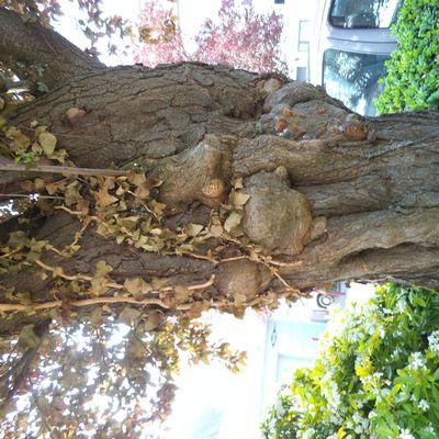 arbre à boules : explication du menuisart
