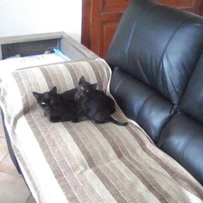 notre chaton Maxwell et sa maman