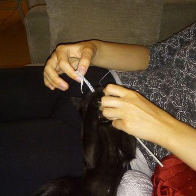chaton Maxwell veut faire du crochet