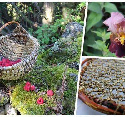 Vannerie sauvage : les feuilles d'iris en vidéo.