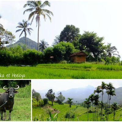 Randonnées dans les rizières de Mediwaka et Heeloya