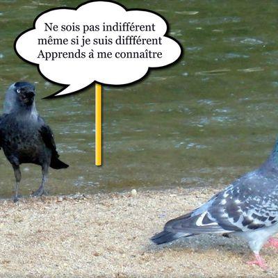 Image citation 31  (4/10) - L'indifférence face à la différence
