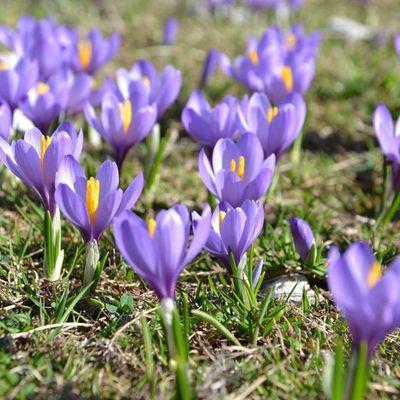 Ouverture ce printemps