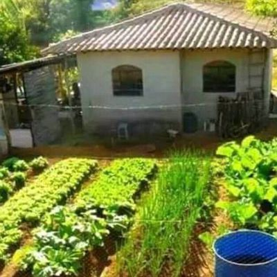 Permaculture au Cameroun - Permaculture in Cameroon - Constant Mabonna