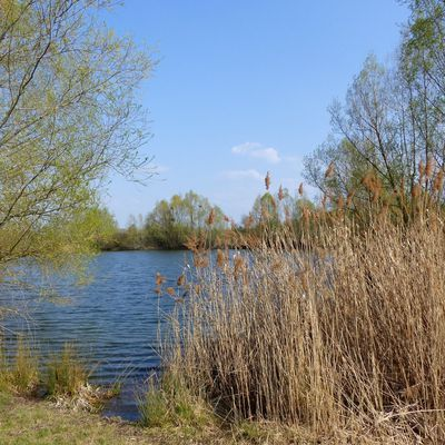 Etangs de Cergy fin mars