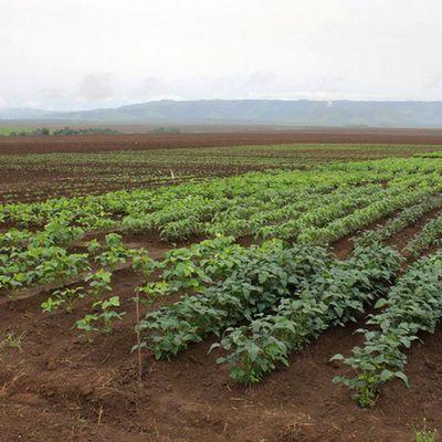 Estação Experimental ajuda na melhoria da produção agrícola