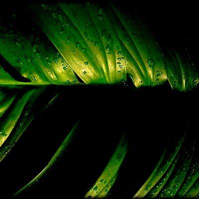 La Plante Verte