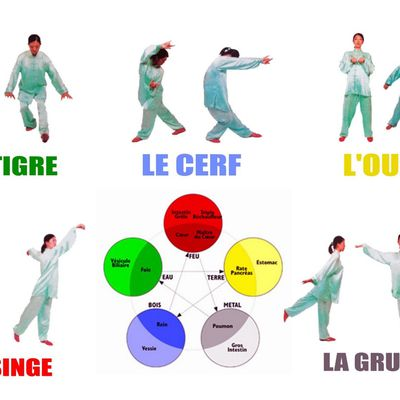 Qi gong les 5 animaux