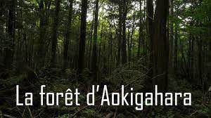 Aokigahara Jukai : la forêt maudite