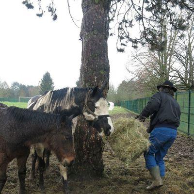 Valenton : les chevaux laissés à l'abandon sauvés par la fondation Bardot