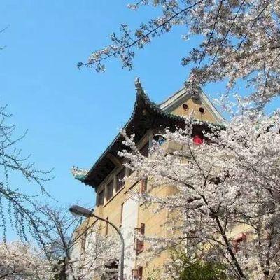 Vive la saison des cerisiers en fleurs !