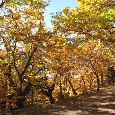 Sentiers d'automne, lundi 20 novembre.