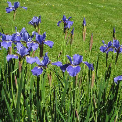 Les fleurs du jour
