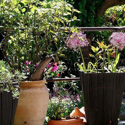 Rêve de jardin en Vaunage pour que vive les roses