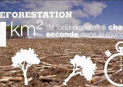 Déforestation : le plus gros des mensonges médiatiques