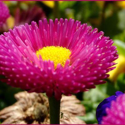 Parterres de fleurs...
