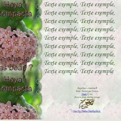 Hoya Compacta Ne suis-je pas beau Incredimail & Papier A4 h & outlook & enveloppe & 2 cartes A5 & signets hoya_compacta_ne_suis_je_pas_beau_167989_00