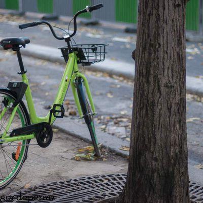 """Ces nouveaux """" vélib """" express qui poussent au pied des arbres .."""