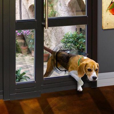 Give Your Dog the Freedom to Move Around with The Right Type of Dog Door