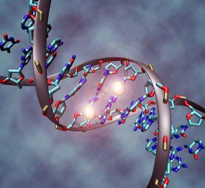 Révolution génétique : les 7 utilisations de CRISPR qui pourraient changer notre vie