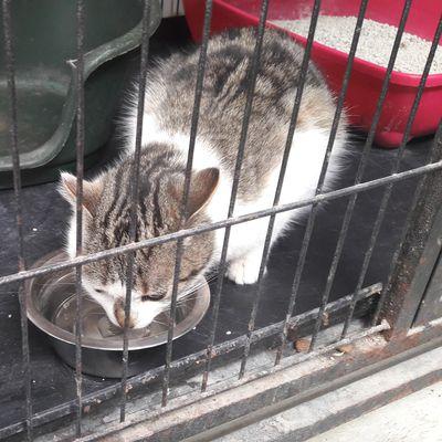 A adopter :