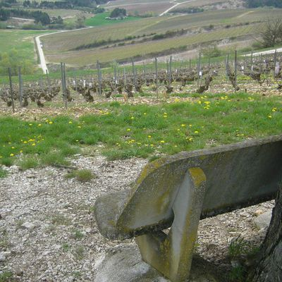 vignoble champenois pour la communauté des bancs